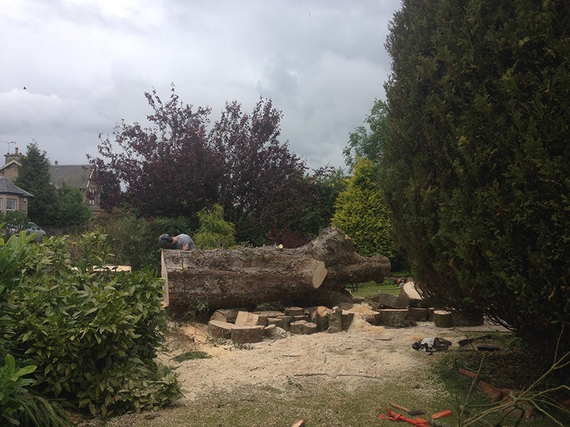 Tree Services in Stirling Tree Cutting