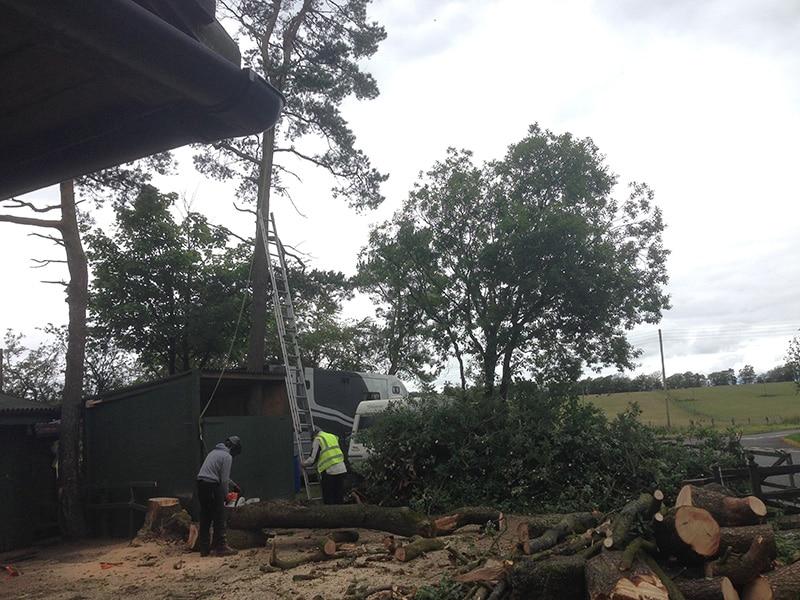 Tree Surgeons in Stirling Tree Work