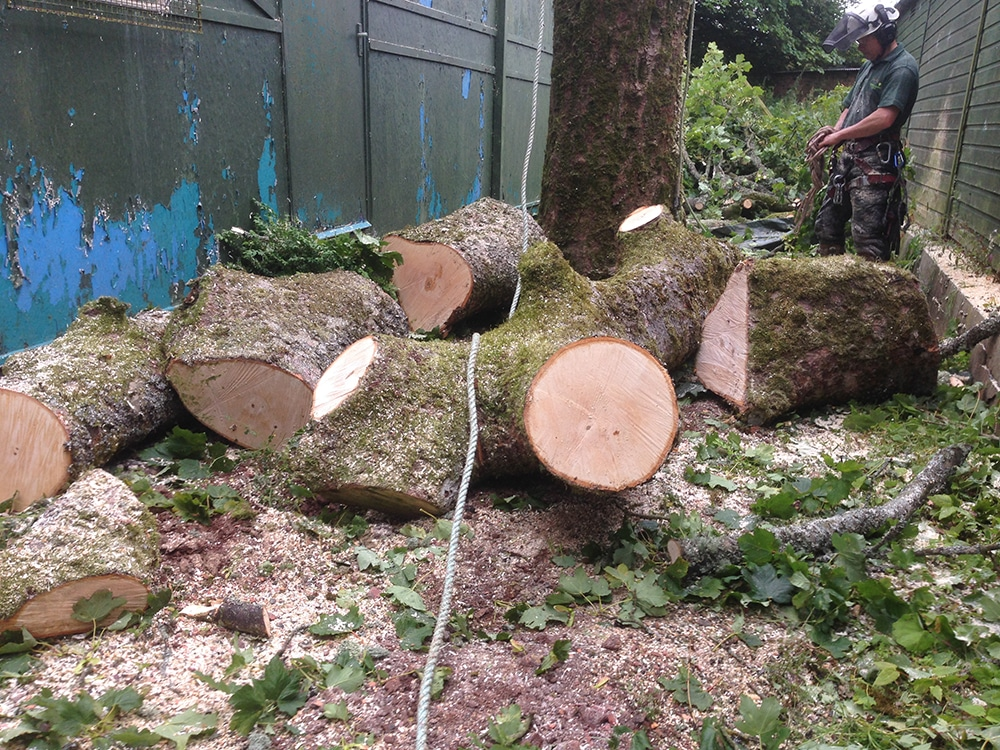 Tree Removal - Tree Surgeons Falkirk